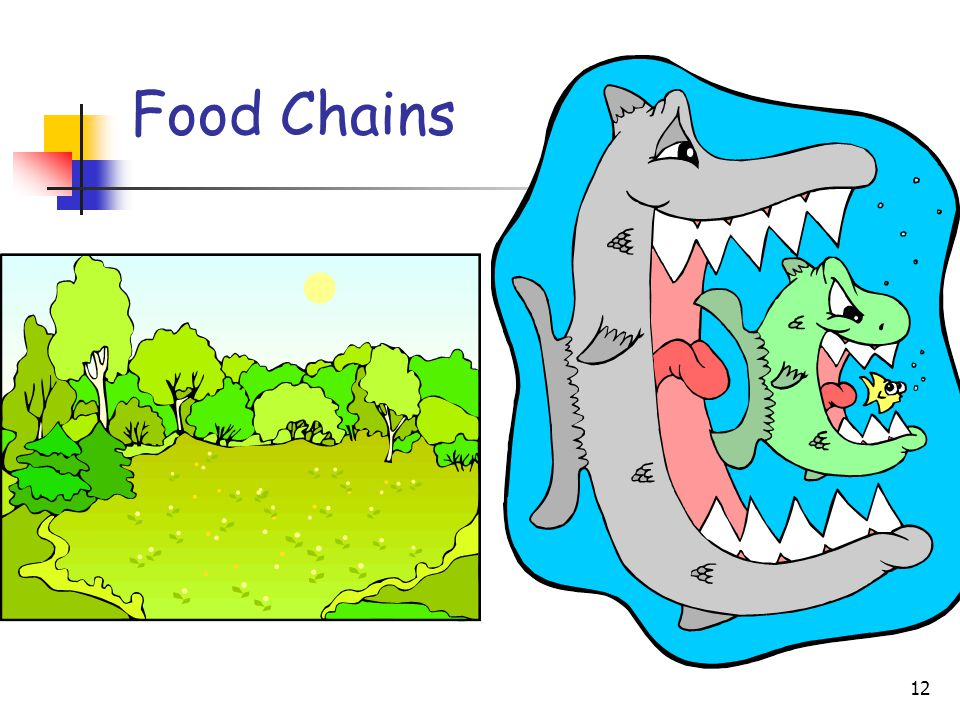 12 Food Chains