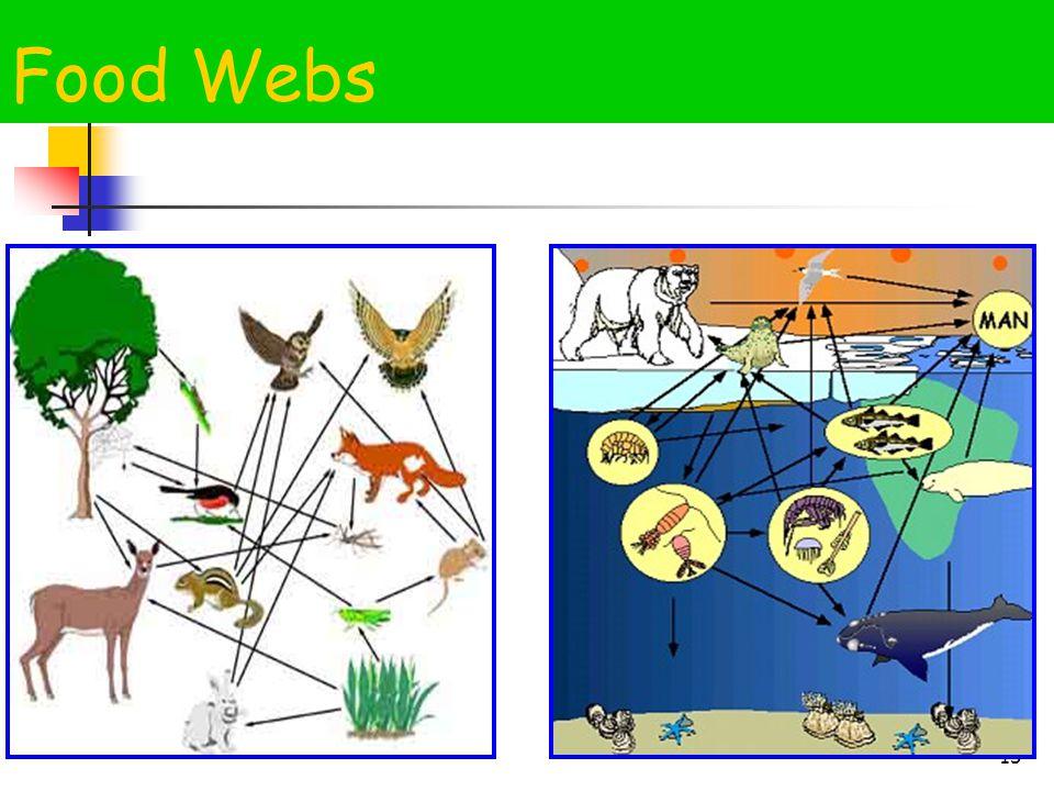 15 Food Webs