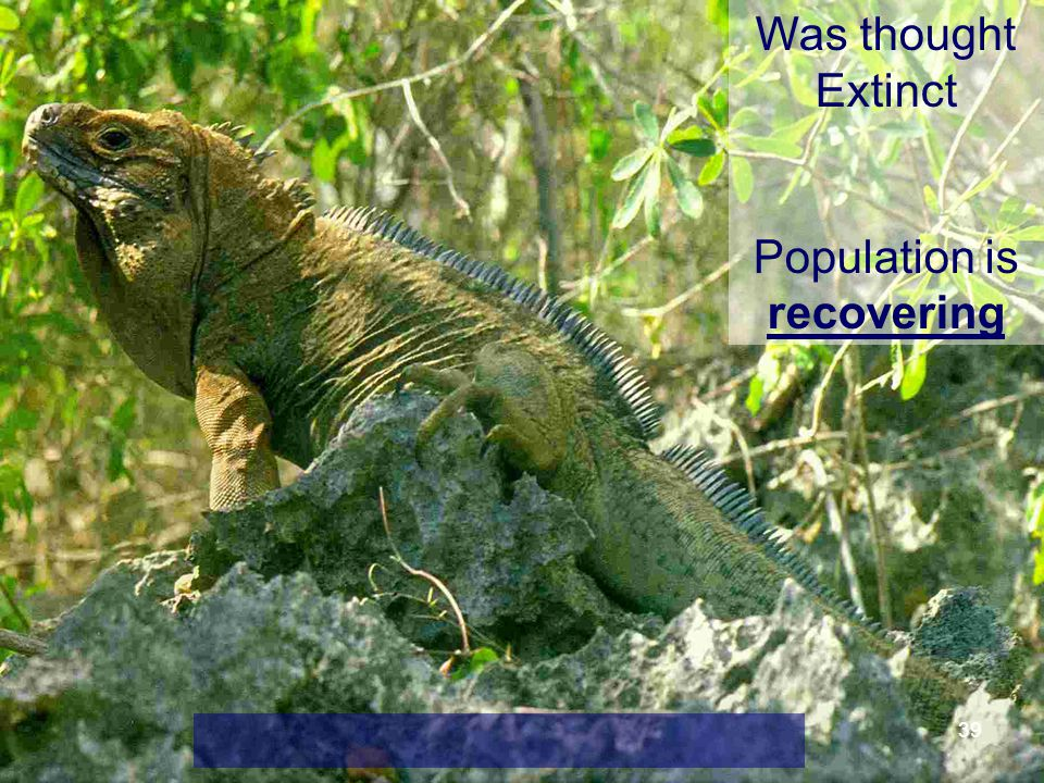 39 Was thought Extinct Population is recovering