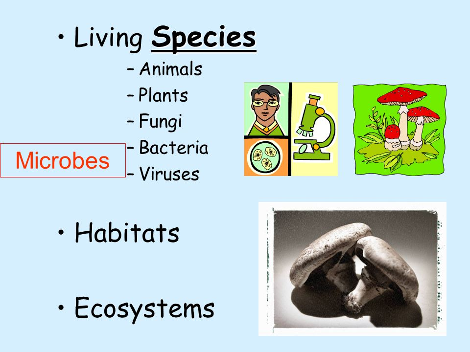 5 SpeciesLiving Species –Animals –Plants –Fungi –Bacteria –Viruses Habitats Ecosystems Microbes