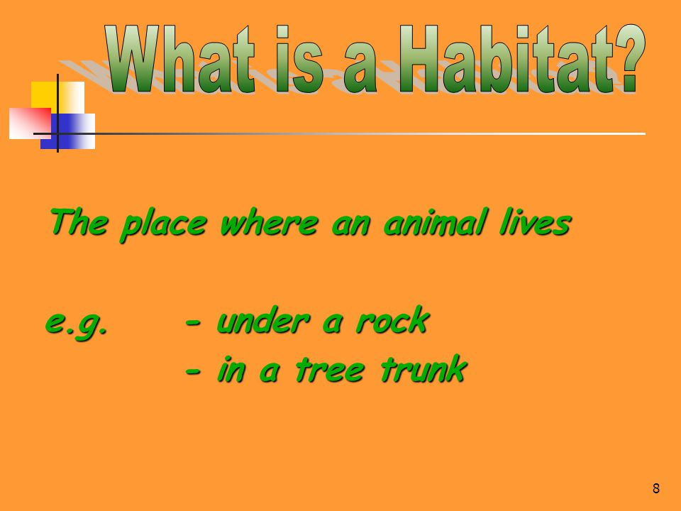 8 The place where an animal lives e.g. - under a rock - in a tree trunk