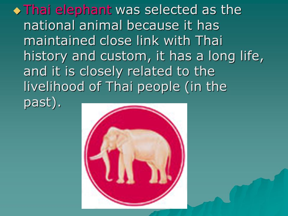 Thai elephant was selected as the national animal because it has maintained close link with Thai history and custom, it has a long life, and it is closely related to the livelihood of Thai people (in the past).