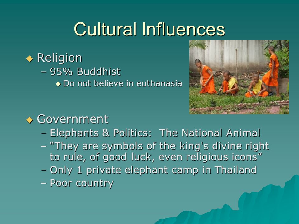 Cultural Influences Religion Religion –95% Buddhist Do not believe in euthanasia Do not believe in euthanasia Government Government –Elephants & Politics: The National Animal –They are symbols of the king s divine right to rule, of good luck, even religious icons –Only 1 private elephant camp in Thailand –Poor country