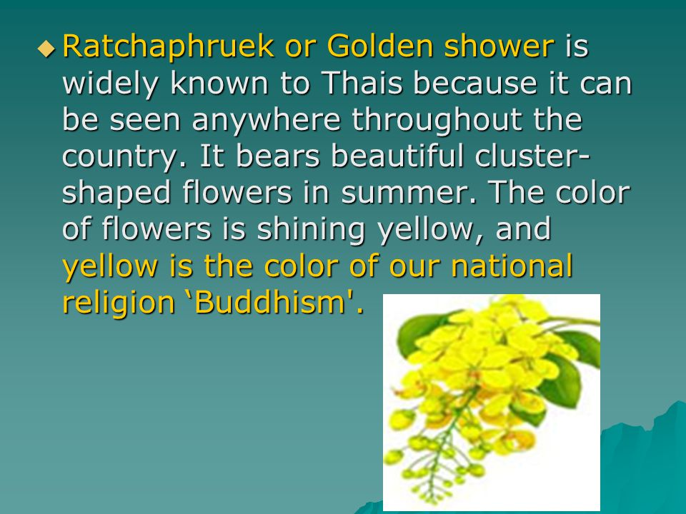 Ratchaphruek or Golden shower is widely known to Thais because it can be seen anywhere throughout the country.