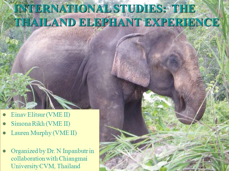 INTERNATIONAL STUDIES: THE THAILAND ELEPHANT EXPERIENCE Einav Elitsur (VME II) Simona Rikh (VME II) Lauren Murphy (VME II) Organized by Dr.