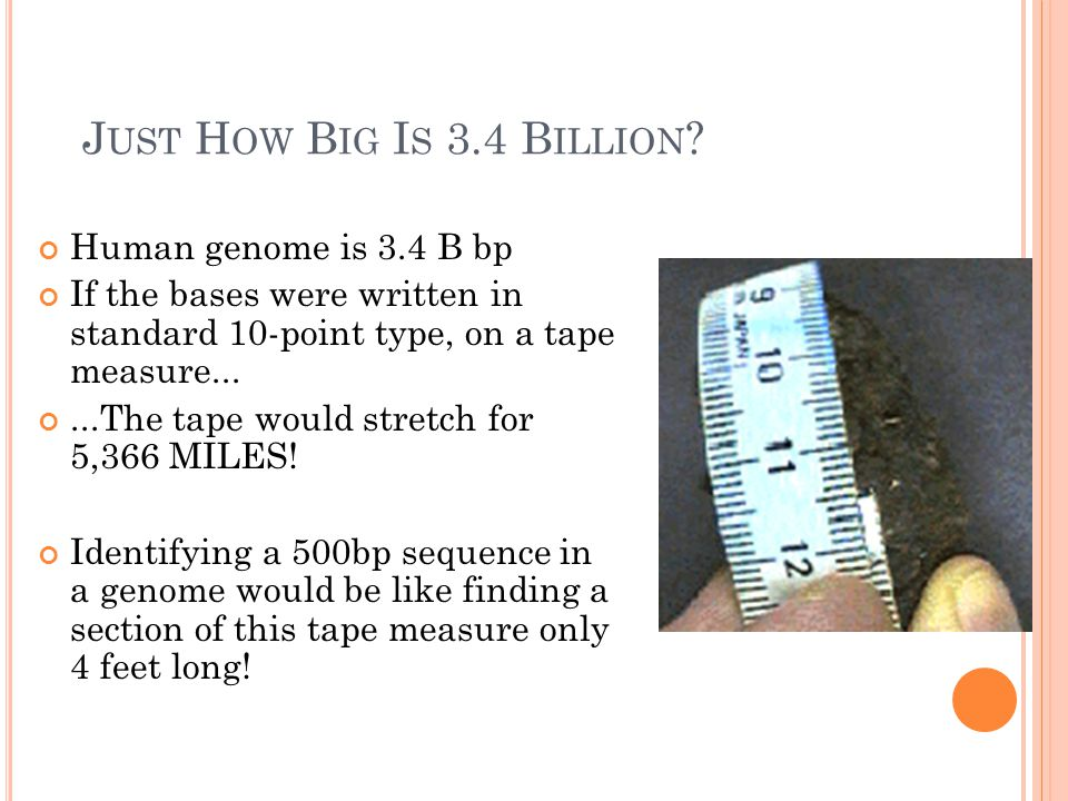 J UST H OW B IG I S 3.4 B ILLION ? Human genome is 3.4 B bp If the bases were written in standard 10-point type, on a tape measure......The tape would