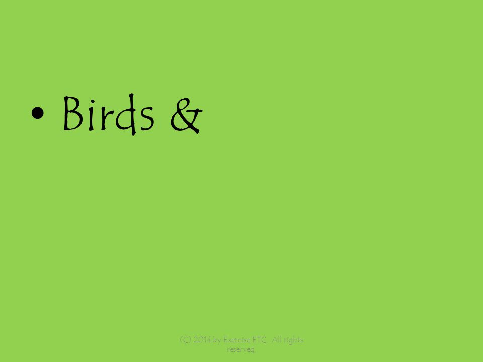 Birds & (C) 2014 by Exercise ETC. All rights reserved,