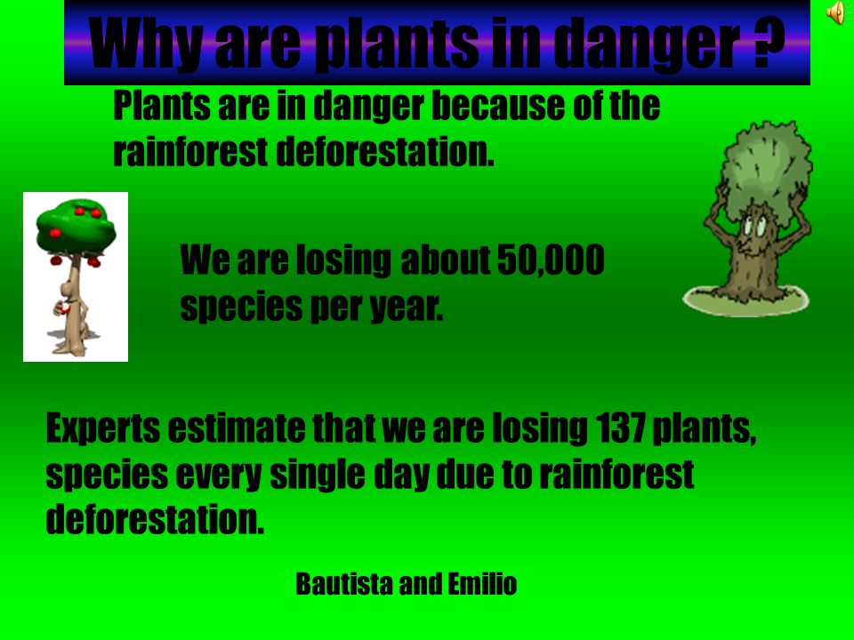 Why are plants in danger .Plants are in danger because of the rainforest deforestation.
