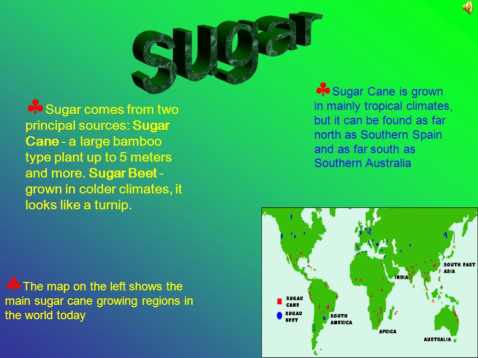 Sugar Cane is grown in mainly tropical climates, but it can be found as far north as Southern Spain and as far south as Southern Australia The map on the left shows the main sugar cane growing regions in the world today Sugar comes from two principal sources: Sugar Cane - a large bamboo type plant up to 5 meters and more.