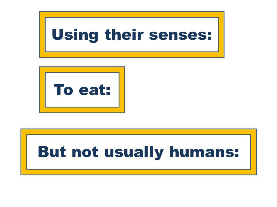 Using their senses: To eat: But not usually humans: