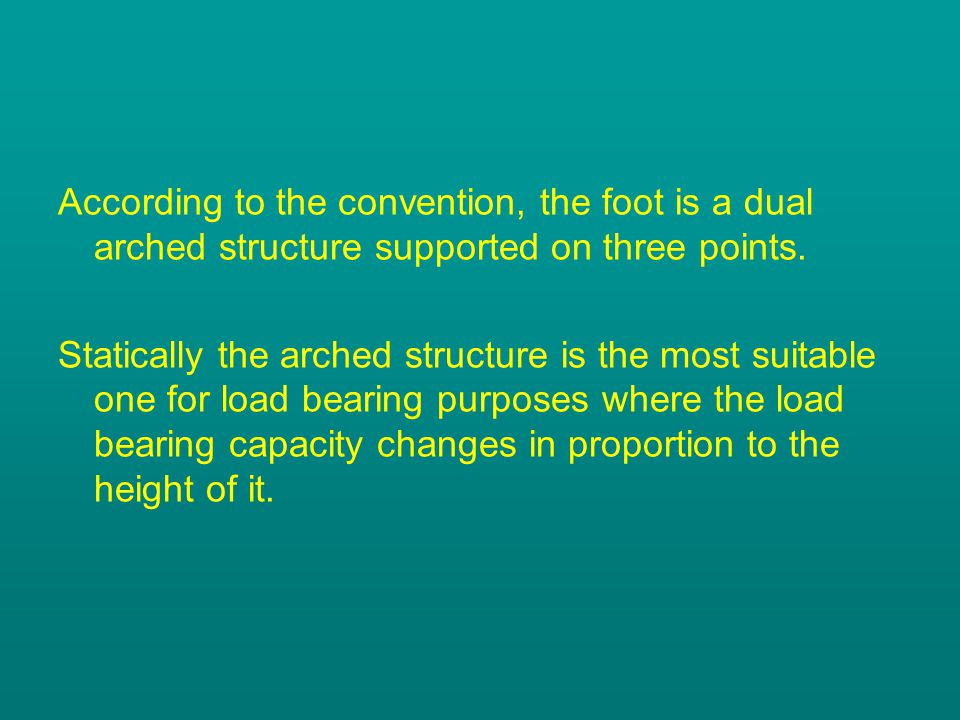 According to the convention, the foot is a dual arched structure supported on three points.