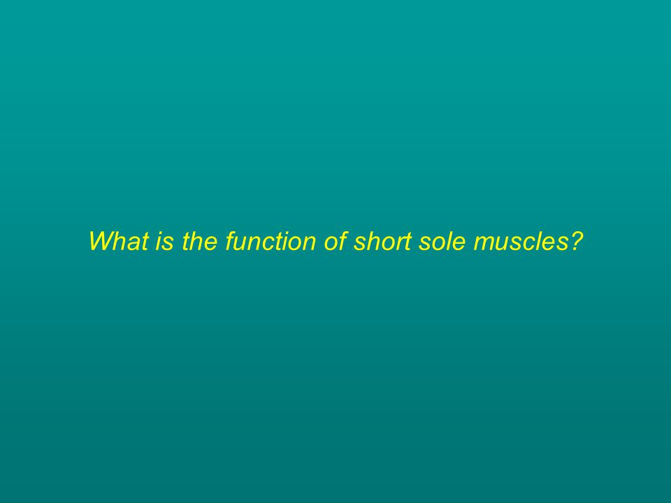 What is the function of short sole muscles?