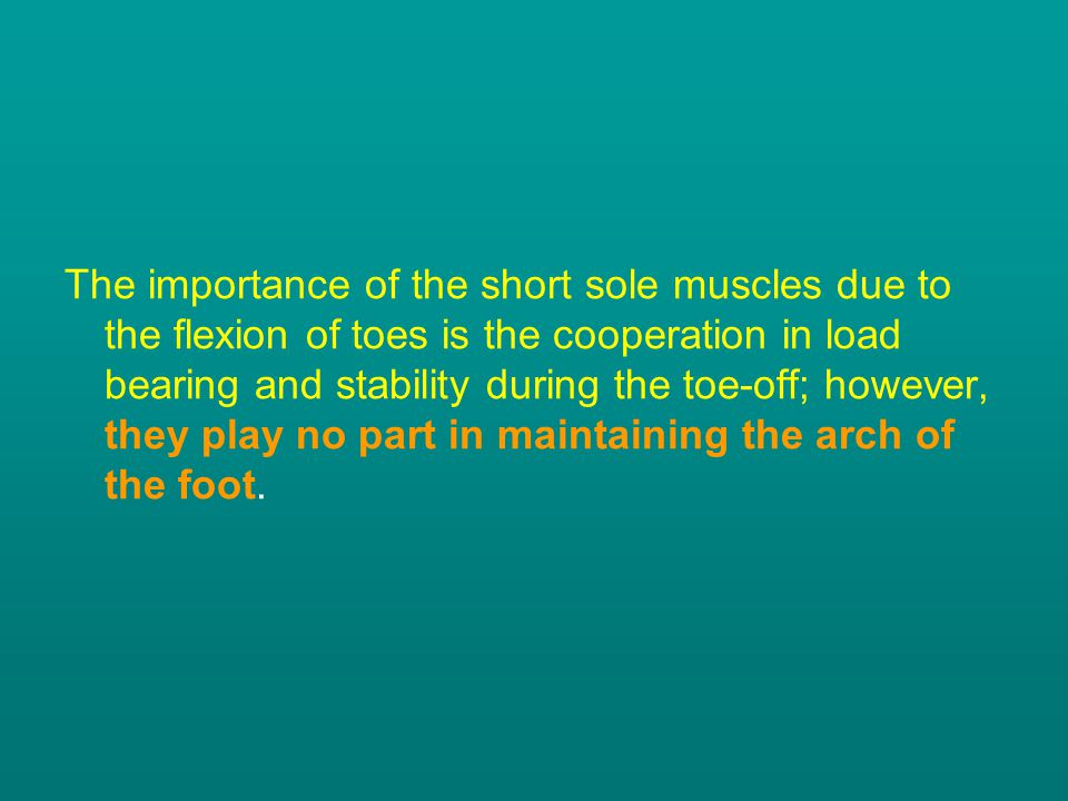 The importance of the short sole muscles due to the flexion of toes is the cooperation in load bearing and stability during the toe-off; however, they play no part in maintaining the arch of the foot.