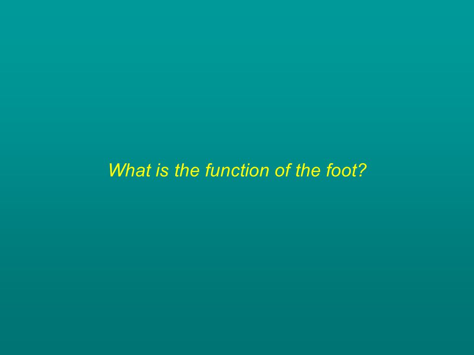 What is the function of the foot?
