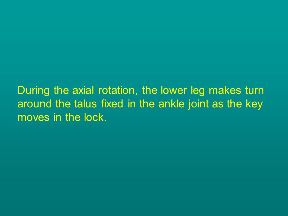 During the axial rotation, the lower leg makes turn around the talus fixed in the ankle joint as the key moves in the lock.
