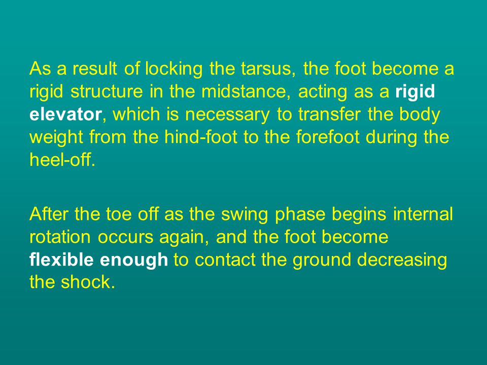 As a result of locking the tarsus, the foot become a rigid structure in the midstance, acting as a rigid elevator, which is necessary to transfer the body weight from the hind-foot to the forefoot during the heel-off.