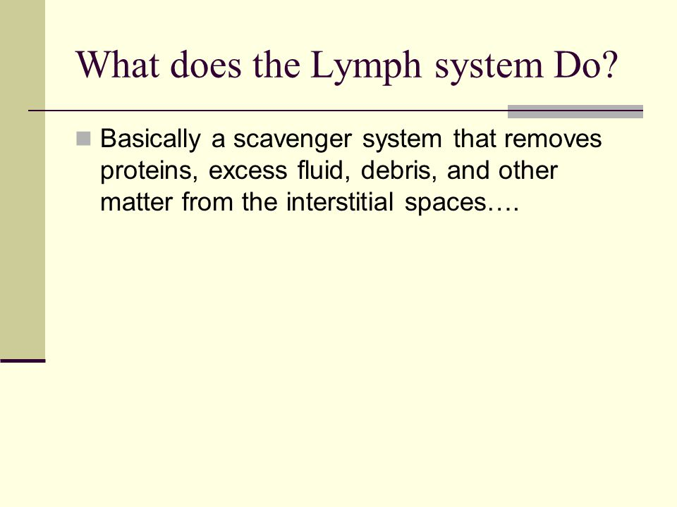 What does the Lymph system Do? Basically a scavenger system that removes proteins, excess fluid, debris, and other matter from the interstitial spaces
