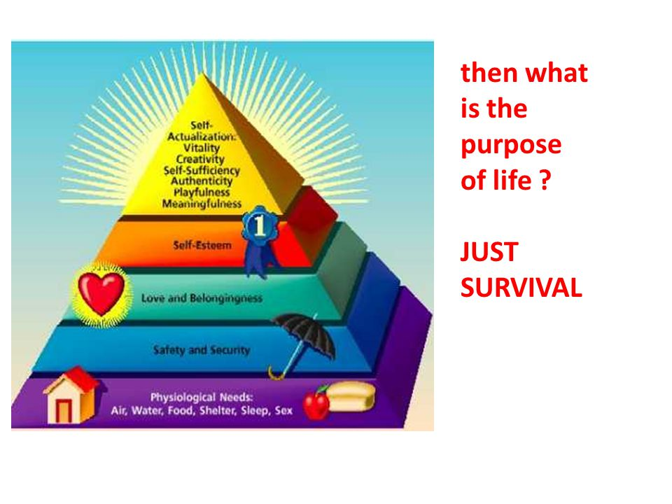 then what is the purpose of life JUST SURVIVAL