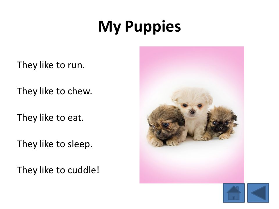 My Puppies They like to run. They like to chew. They like to eat. They like to sleep. They like to cuddle!