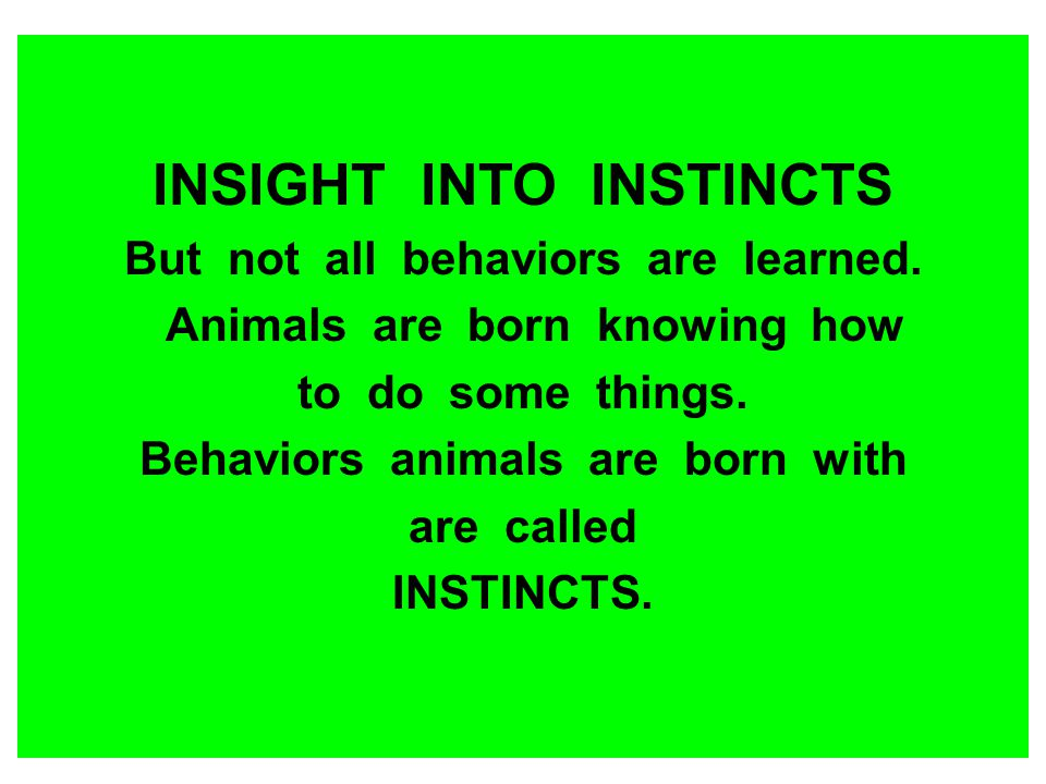 INSIGHT INTO INSTINCTS But not all behaviors are learned. Animals are born knowing how to do some things. Behaviors animals are born with are called I