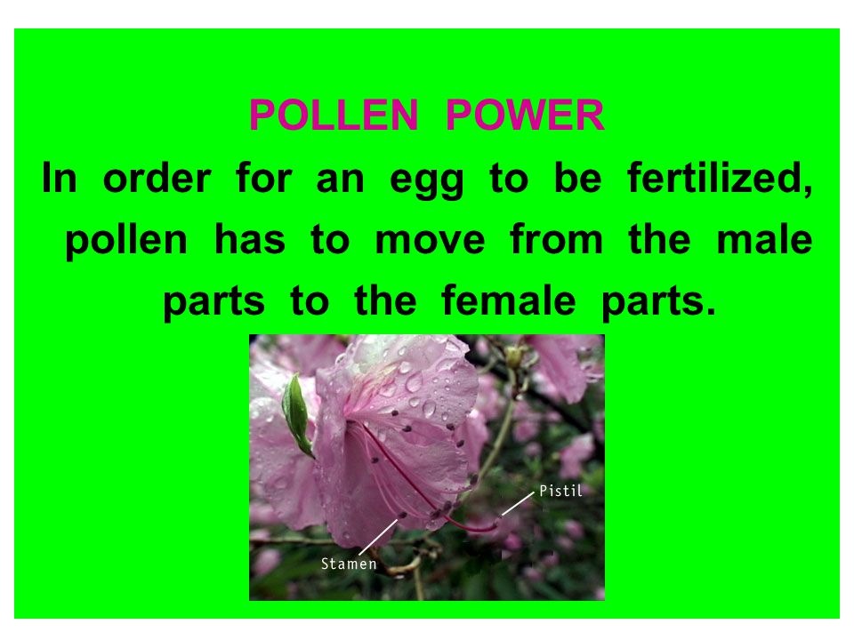 POLLEN POWER In order for an egg to be fertilized, pollen has to move from the male parts to the female parts.