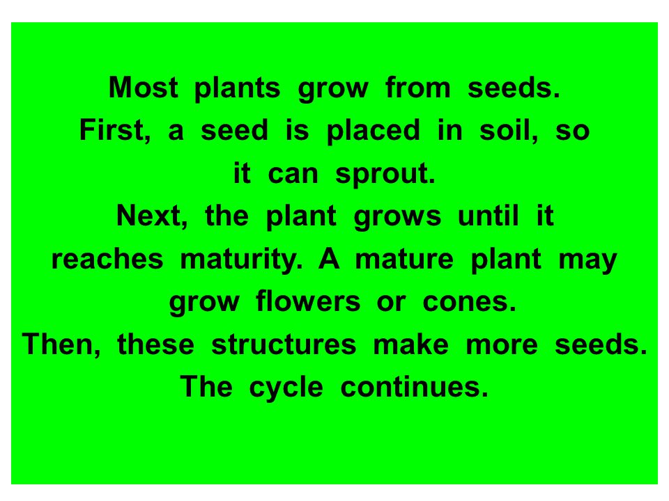 Most plants grow from seeds. First, a seed is placed in soil, so it can sprout. Next, the plant grows until it reaches maturity. A mature plant may gr