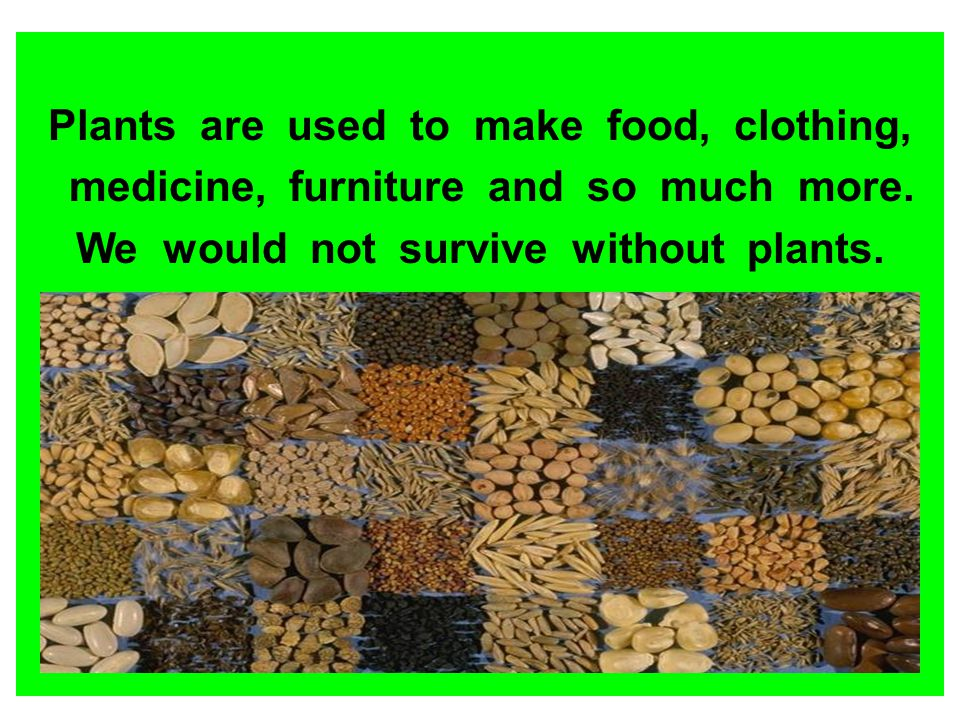 Plants are used to make food, clothing, medicine, furniture and so much more. We would not survive without plants.