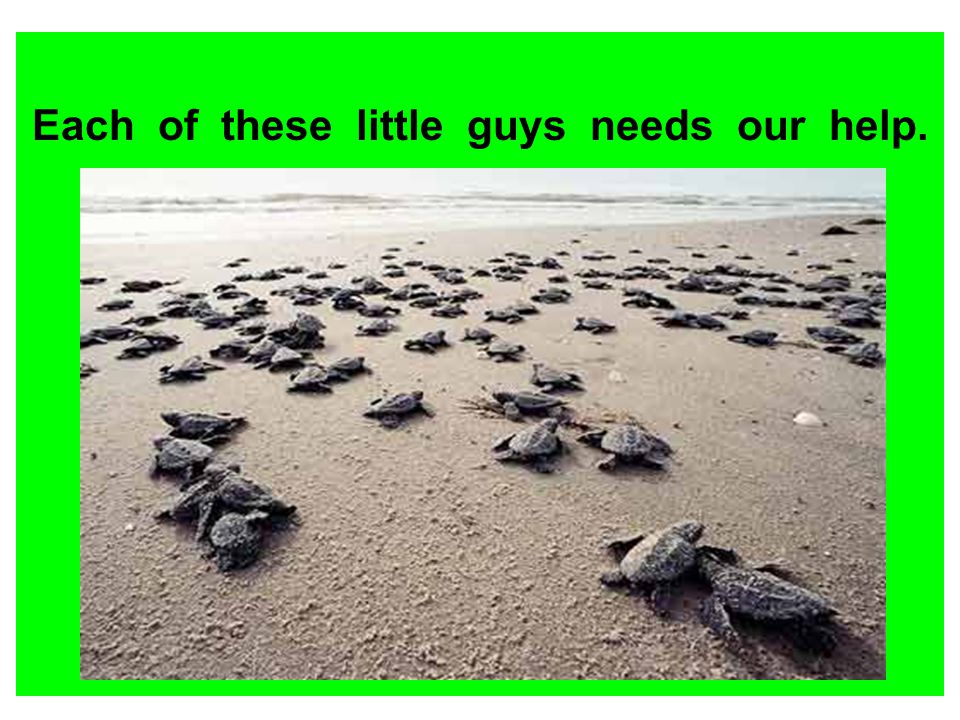 Each of these little guys needs our help.