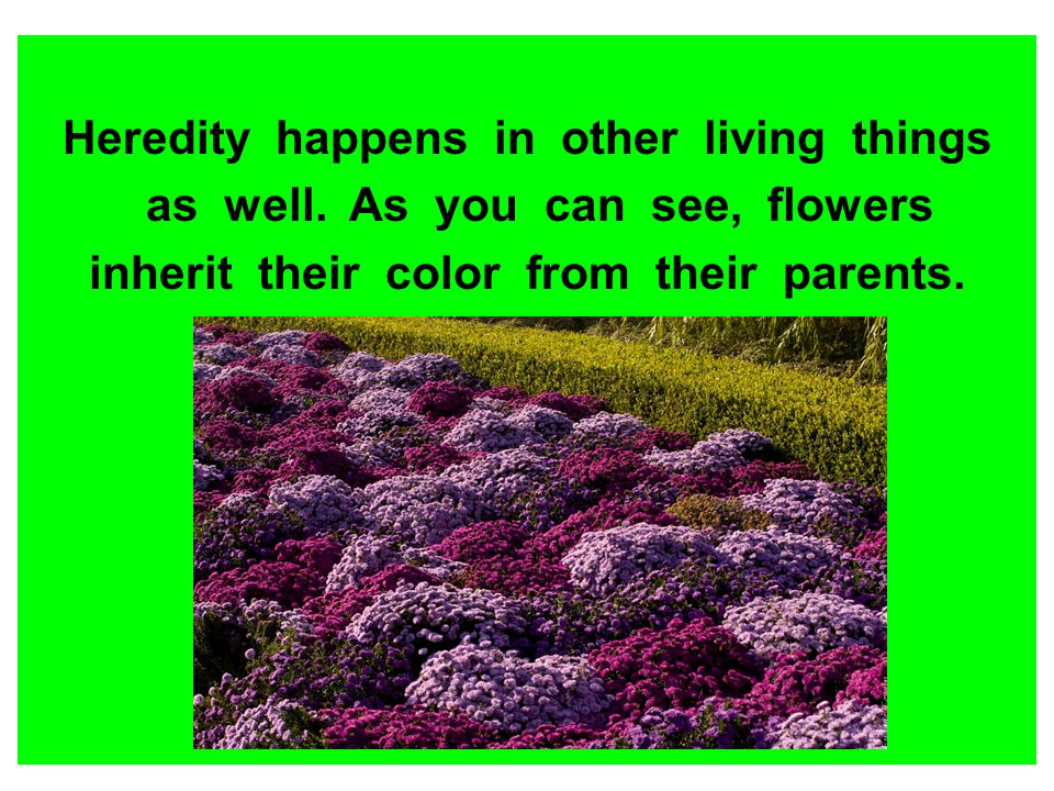 Heredity happens in other living things as well. As you can see, flowers inherit their color from their parents.