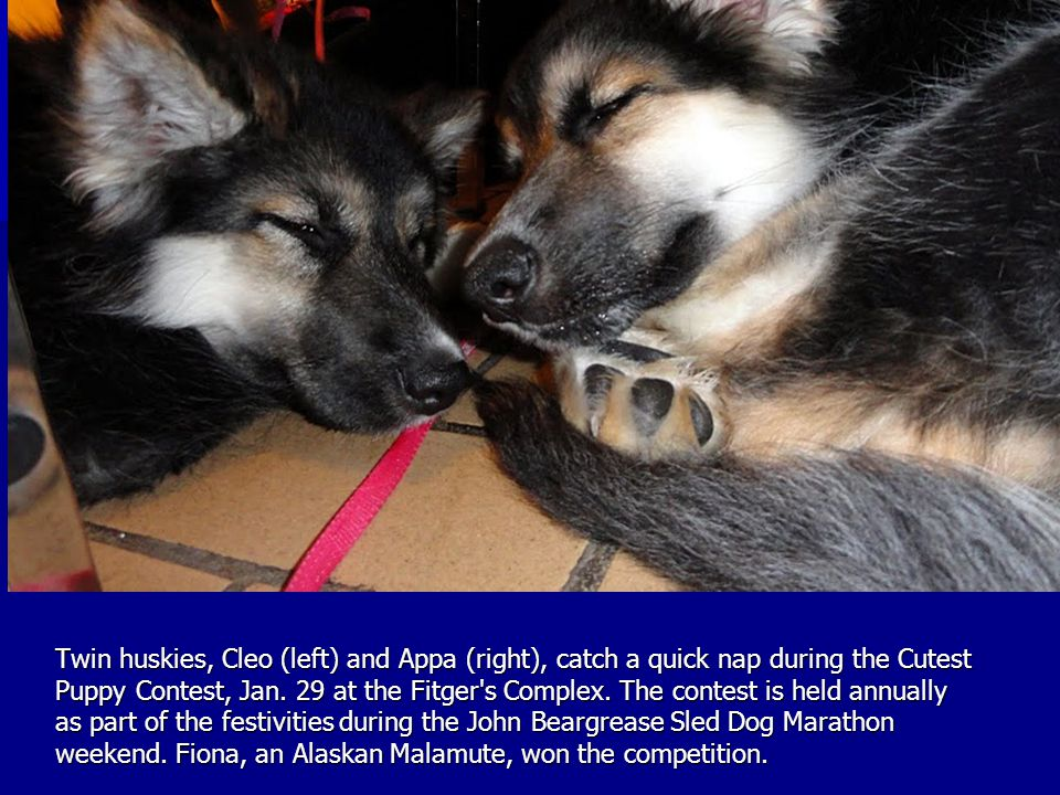 Twin huskies, Cleo (left) and Appa (right), catch a quick nap during the Cutest Puppy Contest, Jan.