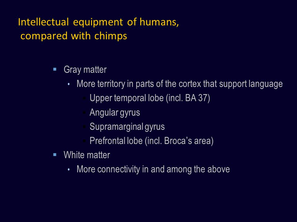 Intellectual equipment of humans, compared with chimps Gray matter More territory in parts of the cortex that support language Upper temporal lobe (incl.