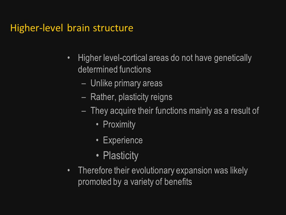 Higher-level brain structure Higher level-cortical areas do not have genetically determined functions –Unlike primary areas –Rather, plasticity reigns –They acquire their functions mainly as a result of Proximity Experience Plasticity Therefore their evolutionary expansion was likely promoted by a variety of benefits