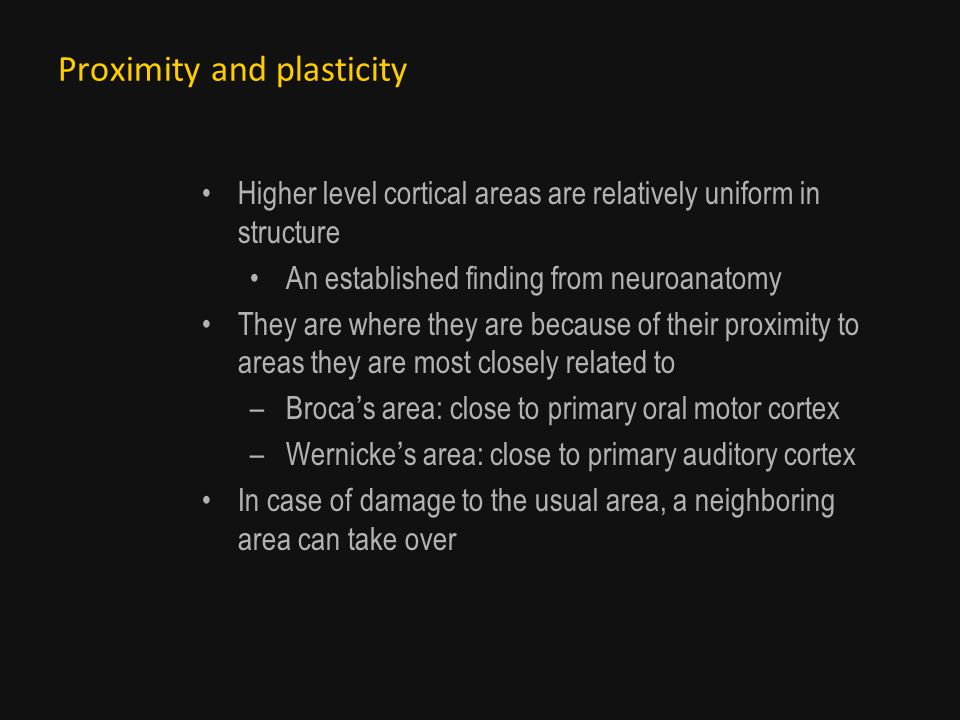 Proximity and plasticity Higher level cortical areas are relatively uniform in structure An established finding from neuroanatomy They are where they are because of their proximity to areas they are most closely related to –Brocas area: close to primary oral motor cortex –Wernickes area: close to primary auditory cortex In case of damage to the usual area, a neighboring area can take over