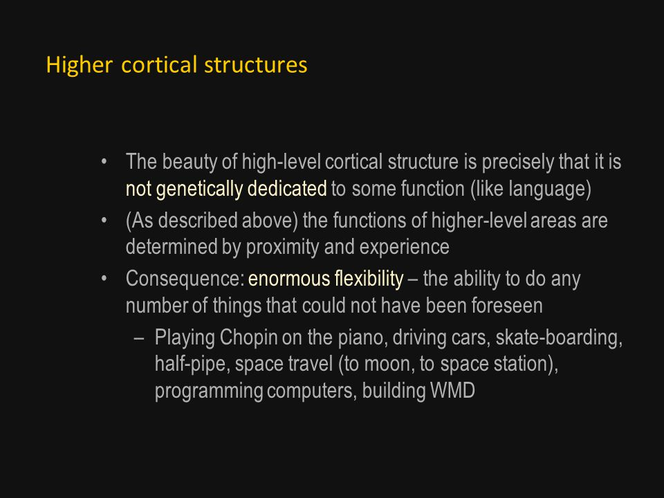 Higher cortical structures The beauty of high-level cortical structure is precisely that it is not genetically dedicated to some function (like language) (As described above) the functions of higher-level areas are determined by proximity and experience Consequence: enormous flexibility – the ability to do any number of things that could not have been foreseen –Playing Chopin on the piano, driving cars, skate-boarding, half-pipe, space travel (to moon, to space station), programming computers, building WMD