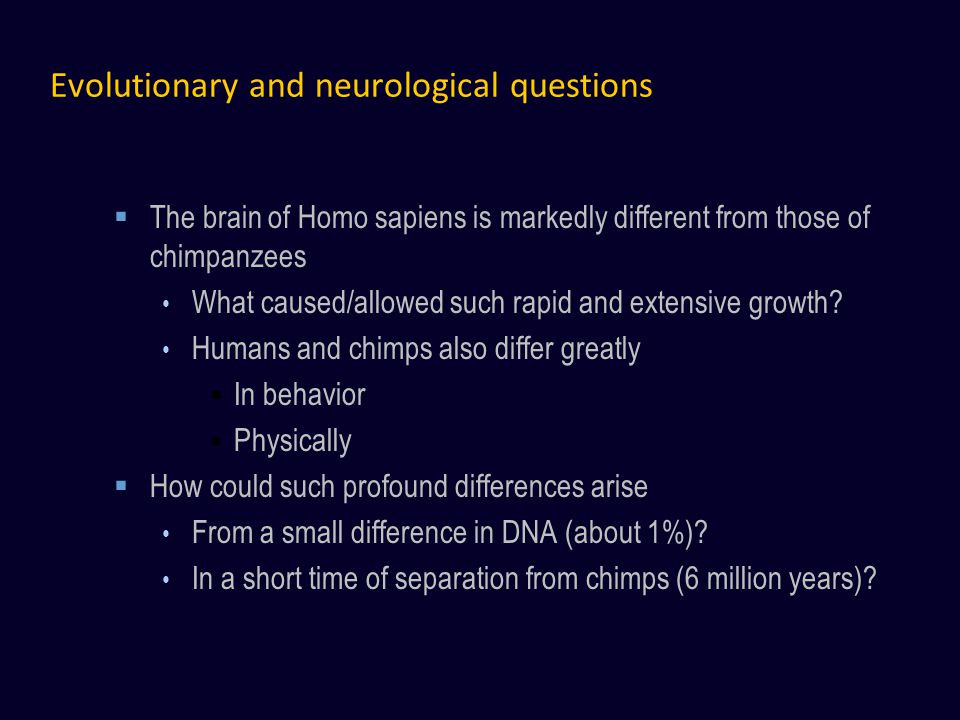 Evolutionary and neurological questions The brain of Homo sapiens is markedly different from those of chimpanzees What caused/allowed such rapid and extensive growth.