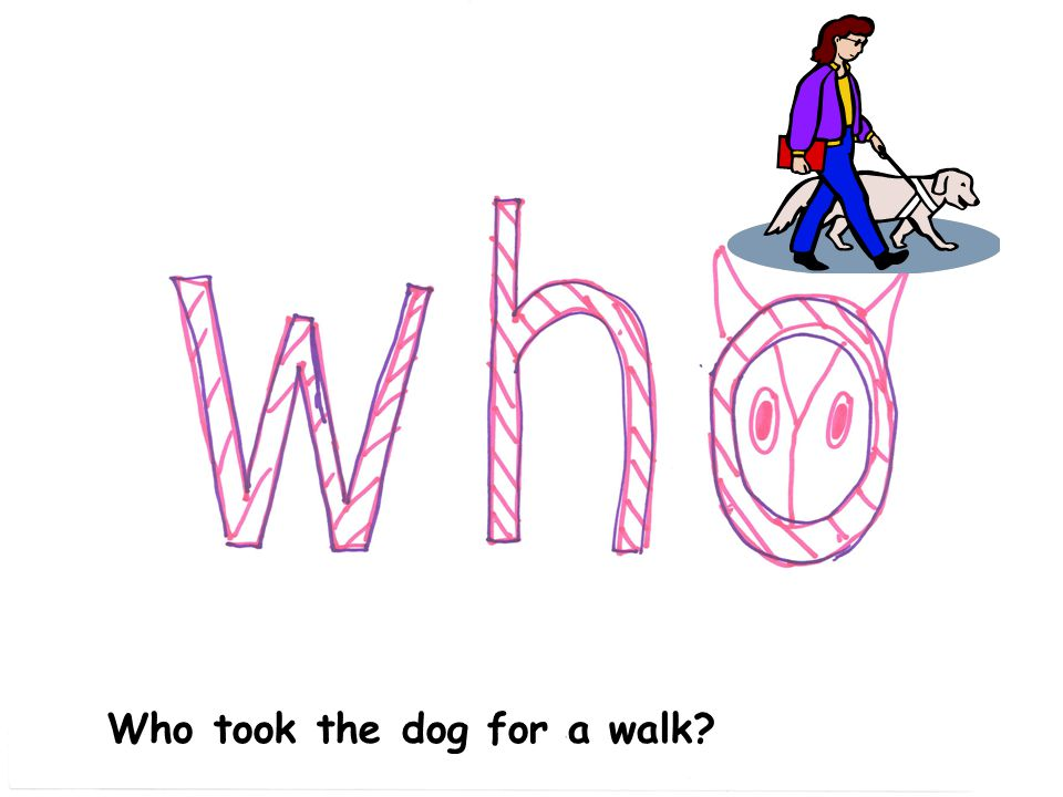 Who took the dog for a walk