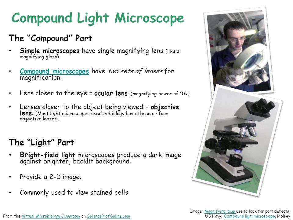 Compound Light Microscope The Compound Part Simple microscopes have single magnifying lens (like a magnifying glass).