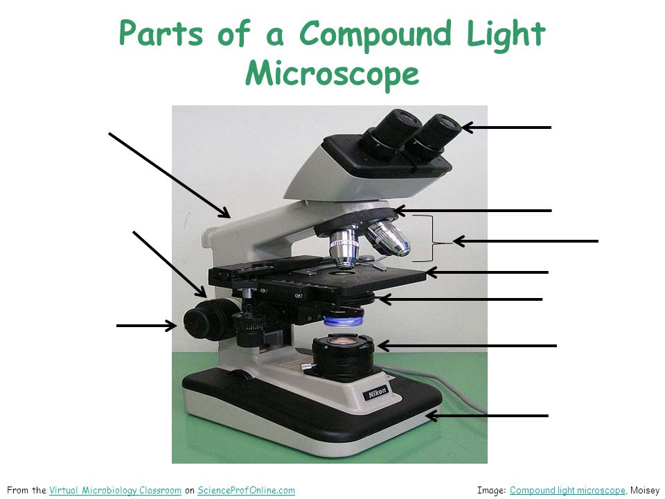 Parts of a Compound Light Microscope Image: Compound light microscope, Moisey Compound light microscope From the Virtual Microbiology Classroom on ScienceProfOnline.comVirtual Microbiology ClassroomScienceProfOnline.com