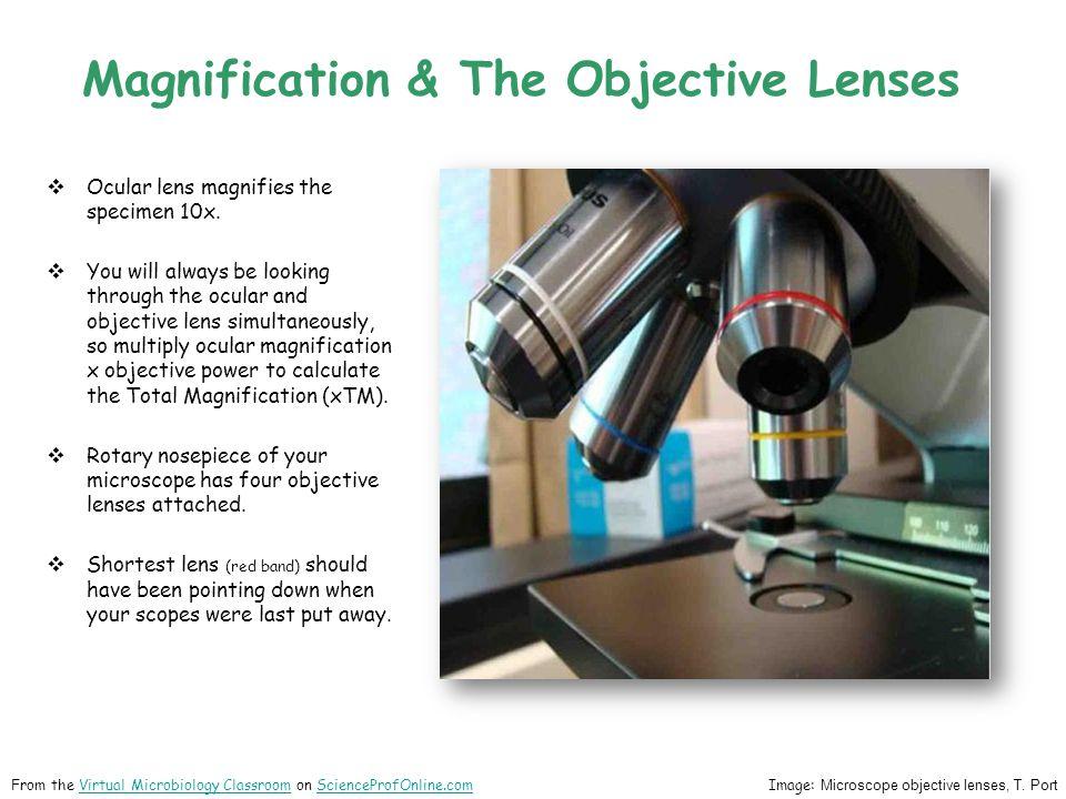 Ocular lens magnifies the specimen 10x.