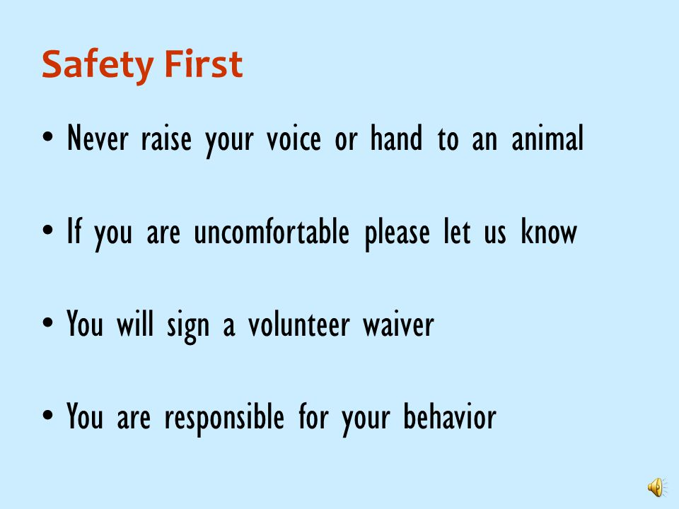 Safety First Never raise your voice or hand to an animal If you are uncomfortable please let us know You will sign a volunteer waiver You are responsible for your behavior