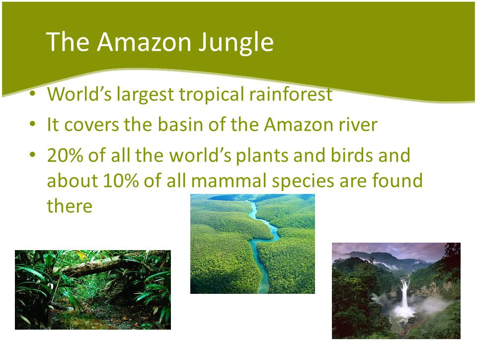 The Amazon Jungle Worlds largest tropical rainforest It covers the basin of the Amazon river 20% of all the worlds plants and birds and about 10% of all mammal species are found there