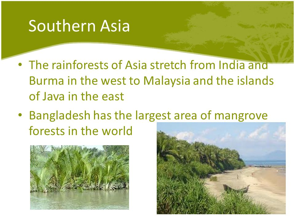Southern Asia The rainforests of Asia stretch from India and Burma in the west to Malaysia and the islands of Java in the east Bangladesh has the largest area of mangrove forests in the world