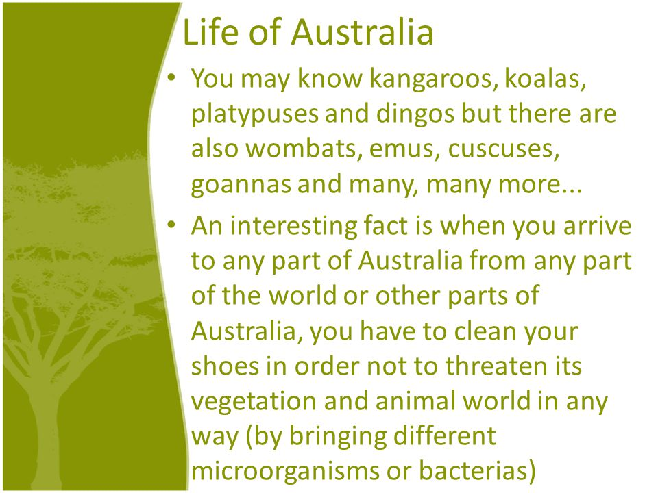 Life of Australia You may know kangaroos, koalas, platypuses and dingos but there are also wombats, emus, cuscuses, goannas and many, many more...