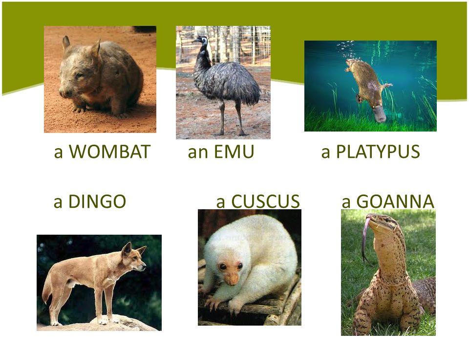 a WOMBAT an EMU a PLATYPUS a DINGO a CUSCUS a GOANNA
