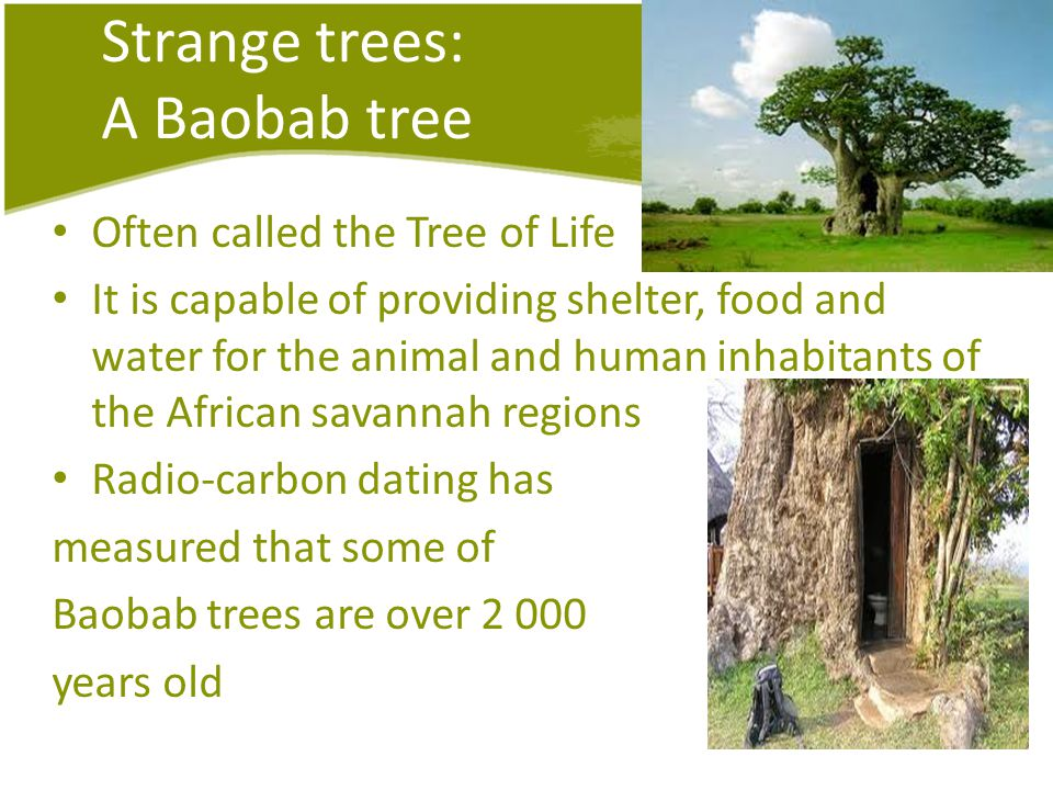 Strange trees: A Baobab tree Often called the Tree of Life It is capable of providing shelter, food and water for the animal and human inhabitants of the African savannah regions Radio-carbon dating has measured that some of Baobab trees are over years old