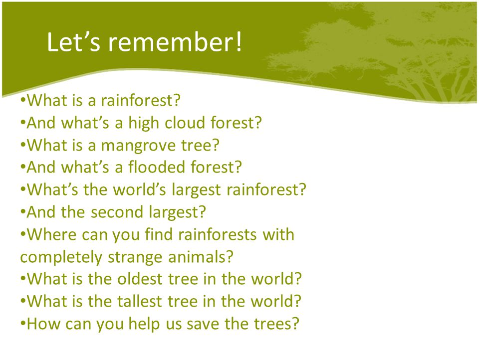Lets remember! What is a rainforest? And whats a high cloud forest? What is a mangrove tree? And whats a flooded forest? Whats the worlds largest rain