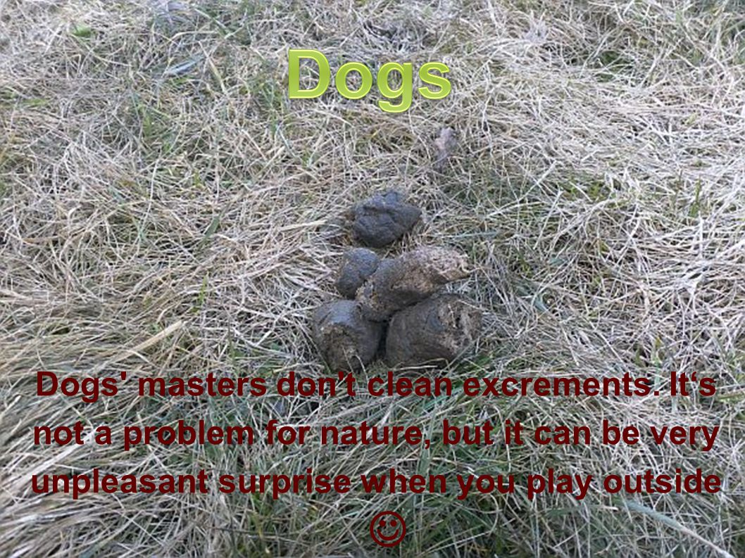 Dogs masters don t clean excrements.