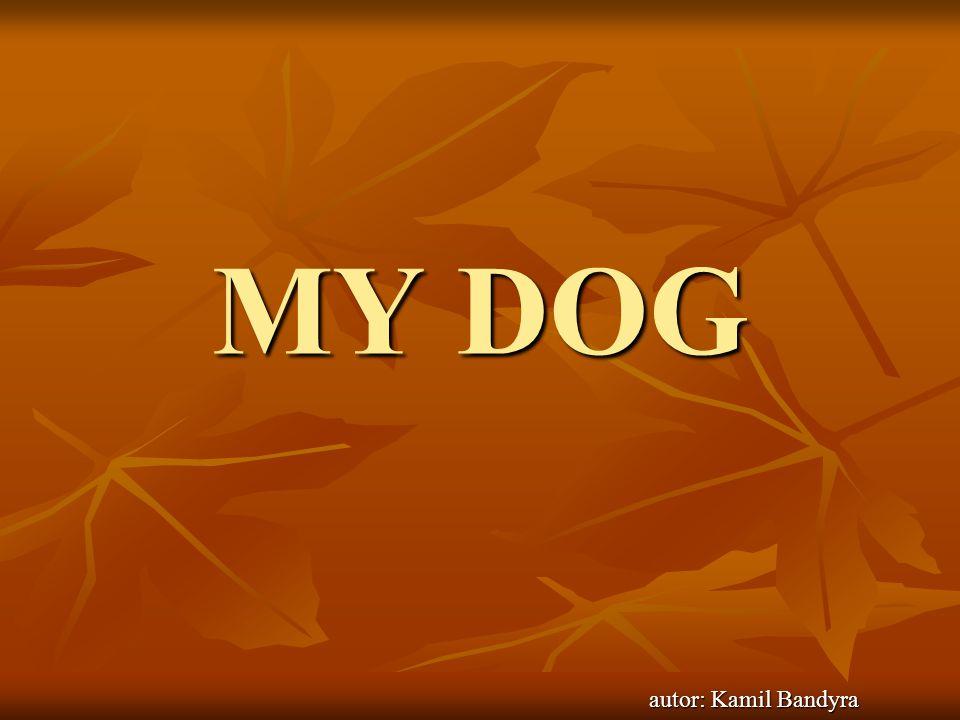 My dog It is my dog.It`s a girl. Her name is Sonia.