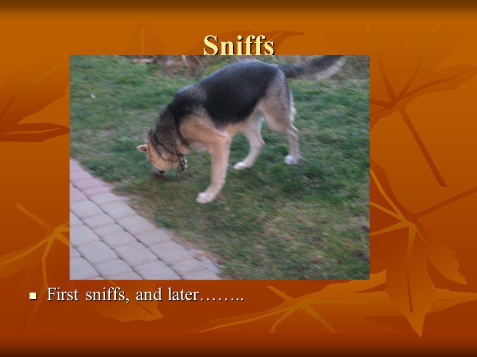 Sniffs First sniffs, and later…….. First sniffs, and later……..