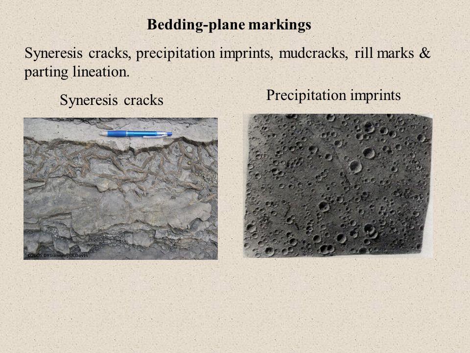 Bedding-plane markings Syneresis cracks, precipitation imprints, mudcracks, rill marks & parting lineation. Syneresis cracks Precipitation imprints